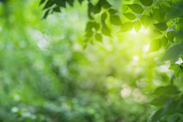 Vista ravvicinata della foglia verde sulla vegetazione offuscata e la luce del sole in giardino utilizzando per pianta verde naturale