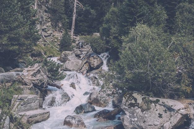 Vista ravvicinata scene di fiume nella foresta, parco nazionale dombai, caucaso, russia, europa. paesaggio estivo, tempo soleggiato e giornata di sole