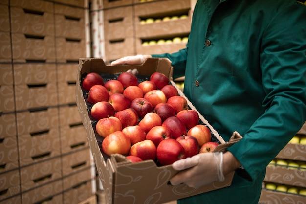 Vista ravvicinata del lavoratore irriconoscibile che tiene cassa piena di mele rosse nel magazzino della fabbrica di alimenti biologici.
