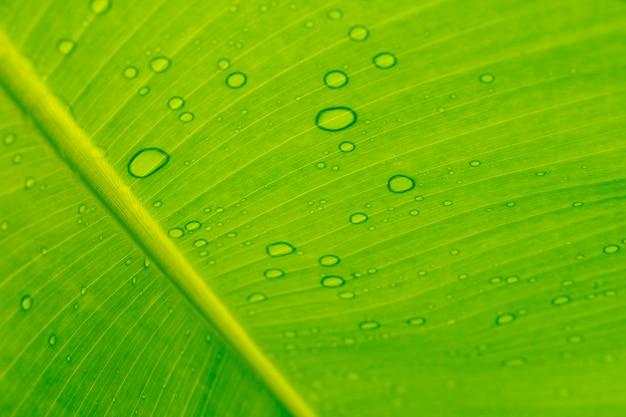 Primo piano goccia d'acqua su sfondo di foglie di banana