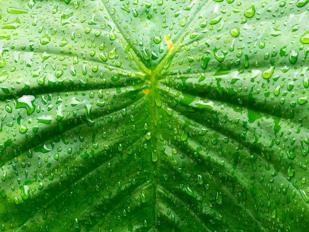 Chiuda in su acqua sulla foglia dopo le gocce di pioggia Foto Premium