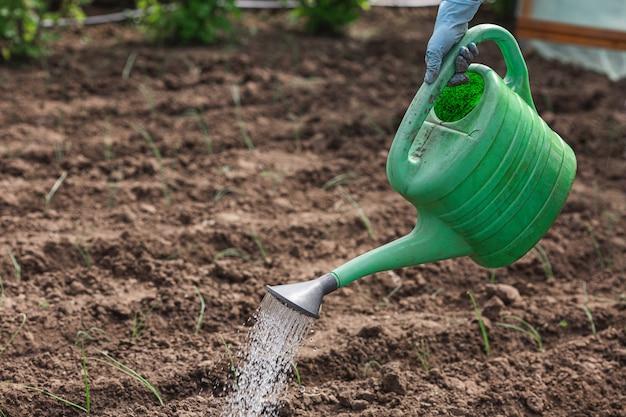Primo piano che innaffia un annaffiatoio verde su un orto.
