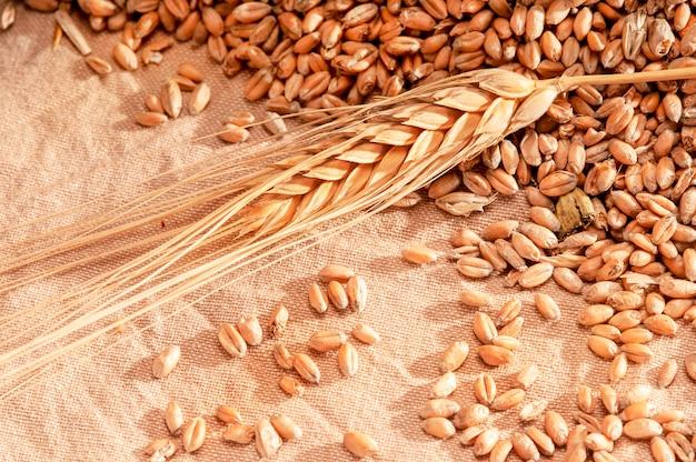 Chiuda in su dell'orecchio di wheath su una tela di iuta