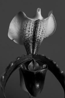 Primo piano di orchidea cymbidium bianca