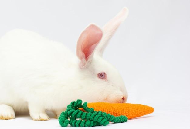 Primo piano di un coniglio bianco che mangia una carota
