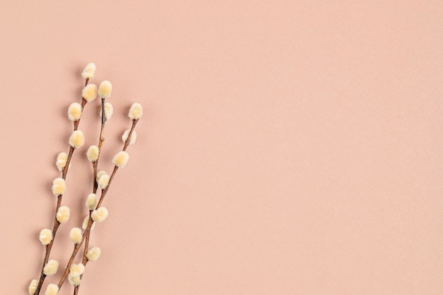 Primo piano su ramoscelli di salice su sfondo rosa