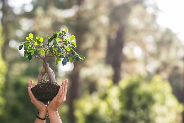 Primo piano con un paio di mani di persone che mostrano un piccolo albero con foresta sfocata