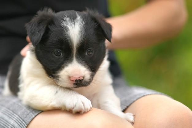 Primo piano di una donna che tiene un piccolo cucciolo in grembo.
