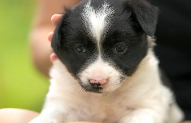 Primo piano di una donna che tiene piccolo cucciolo in grembo.