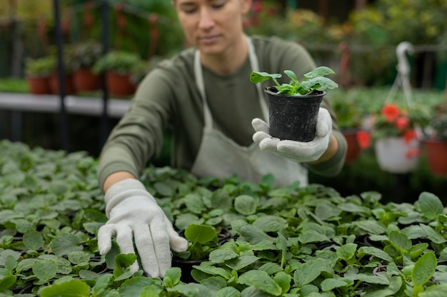 Primo piano donna che si prende cura delle piante