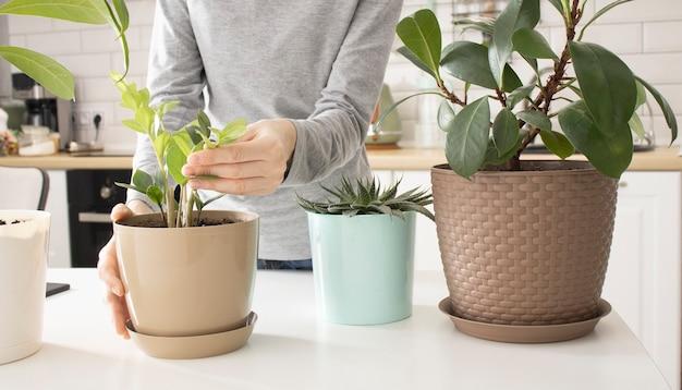 Primo piano di donna che innaffia la pianta verde a casa