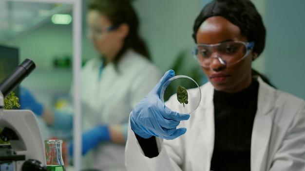 Primo piano di un giovane scienziato che guarda la capsula di petri con una foglia verde che esamina le competenze sulle piante