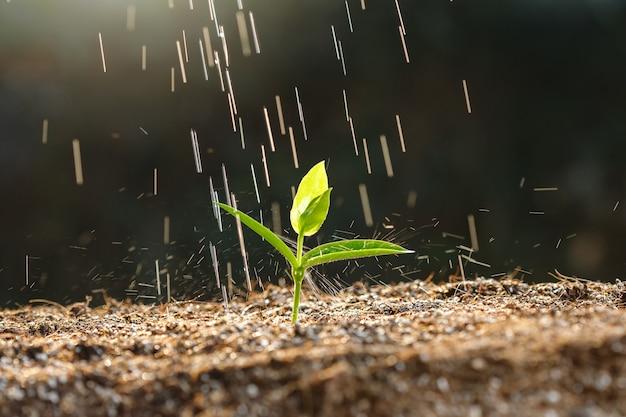Primo piano giovane germoglio in terreno fertile con goccia di pioggia.