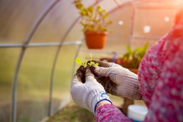 Primo piano di un giovane germoglio nelle mani di un giardiniere con guanti domestici. nuovo concetto di vita
