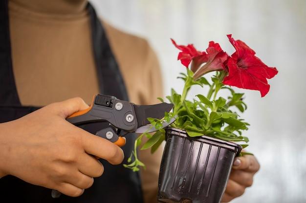Primo piano delle mani della giovane donna che potano le erbacce mentre piantano i fiori in vaso