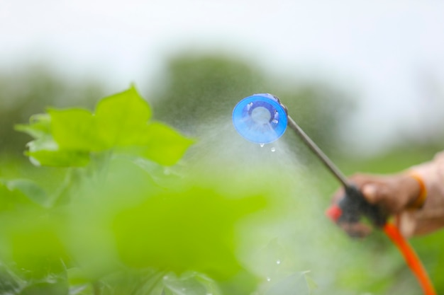 Vista ravvicinata della spruzzatura di pesticidi nel campo agricolo.