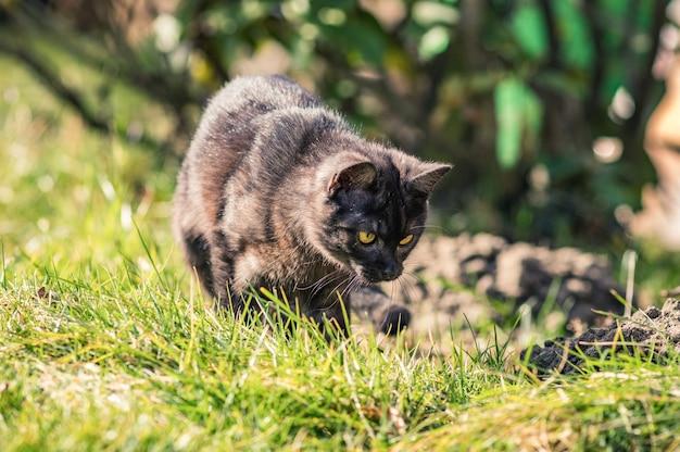 Primo piano di un adorabile gatto nero in un campo coperto di verde sotto la luce del sole