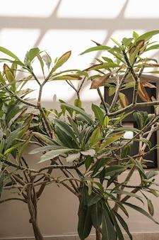 Primo piano di belle foglie di palma tropicali verdi lussureggianti vicino alla parete beige con ombre di luce solare