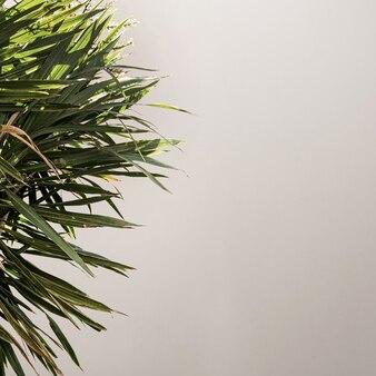 Primo piano di belle foglie di palma tropicali verdi lussureggianti vicino alla parete beige.