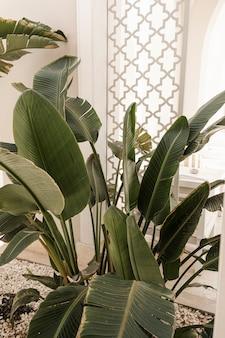 Primo piano di belle foglie di palma tropicali verdi fertili.