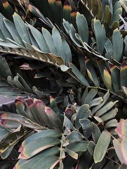 Primo piano di belle foglie di piante tropicali verdi lussureggianti