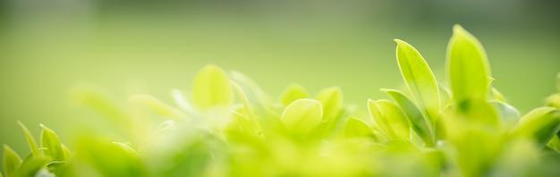 Primo piano di bella foglia verde di vista della natura su fondo vago della pianta in giardino con lo spazio della copia usando come concetto della pagina di copertina del fondo.