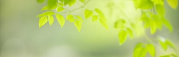 Primo piano di bella foglia verde di vista della natura su fondo vago della pianta in garden