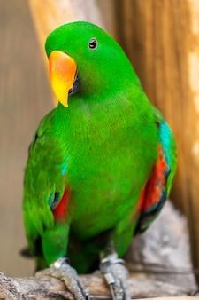 Primo piano di bellissimi pappagalli con peli verdi e bocca giallo-arancione si attacca ai rami