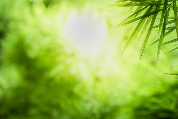 La bella vista del primo piano della foglia di bambù verde della natura su pianta ha offuscato il fondo con lo spazio della copia e di luce solare. è utilizzato per lo sfondo estivo ecologia naturale e il concetto di carta da parati fresca.