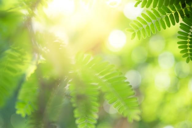 La bella vista del primo piano della foglia verde della natura su pianta ha offuscato il fondo con lo spazio della copia e di luce solare. è utilizzato per lo sfondo estivo ecologia naturale e il concetto di carta da parati fresca.