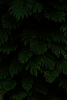 La bella vista del primo piano della foglia verde della natura su verde ha offuscato il fondo con luce solare e lo spazio della copia. è utilizzato per lo sfondo estivo di ecologia naturale e il concetto di carta da parati fresca.