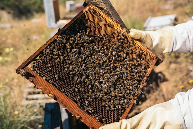 Primo piano di un apicoltore che giudica un favo pieno di api