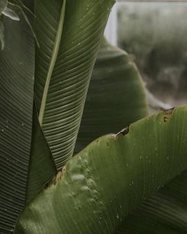 Primo piano delle foglie dell'uccello del paradiso