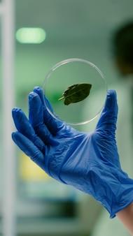 Primo piano del ricercatore botanico che tiene in mano un campione con foglia verde