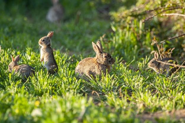 Primo piano di conigli a spazzola in un campo coperto di verde sotto la luce del sole