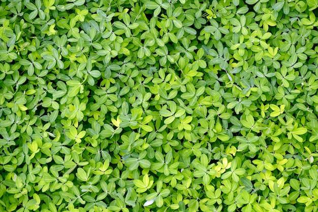 Primo piano del mazzo di foglie verdi, sul pavimento