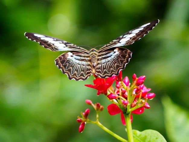 Primo piano farfalla sul fiore Foto Premium