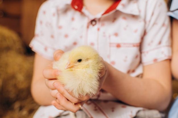 Primo piano di un pollo nelle mani di un bambino pasqua in fattoria