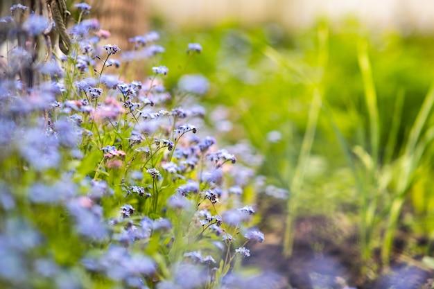 Primo piano di fiori primaverili teneri colorati che fioriscono nel parco verde.
