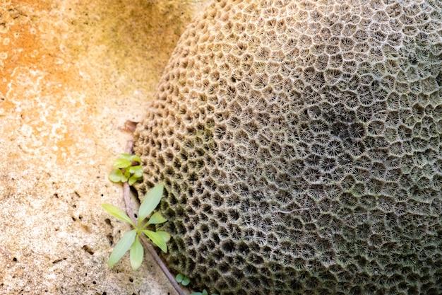 Primo piano dei coralli, struttura di corallo, struttura naturale oceanica astratta