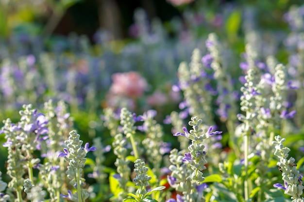 Chiudere e ritagliare piccoli fiori di tartaruga in un parco pubblico con luce solare naturale su sfondo sfocato.