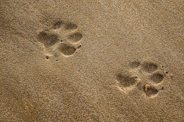 Primo piano della stampa della zampa del cane nella sabbia sulla spiaggia di rota