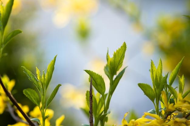 Primo piano di germogli di alberi freschi con foglie verdi in primavera.