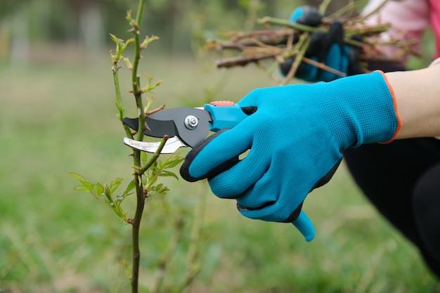 Primo piano della mano di giardinieri in guanti protettivi con potatore del giardino