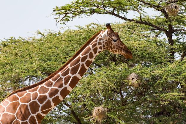Primo piano di una giraffa con molte piante nei precedenti