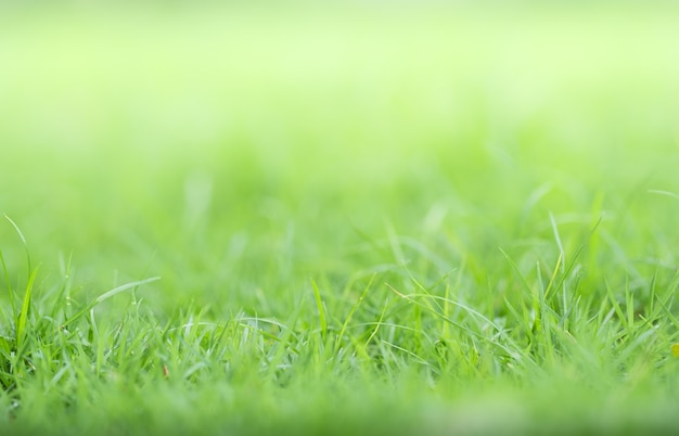 Primo piano di erba verde su vegetazione offuscata e luce solare in giardino utilizzando per pianta verde naturale