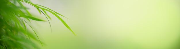 Primo piano della foglia di bambù verde natura su sfondo verde sfocato