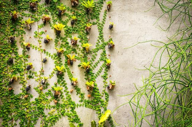 Piante verdi del primo piano sul fondo del muro di cemento
