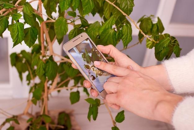 Primo piano delle mani con lo smartphone che fa video o foto come prendersi cura della pianta verde