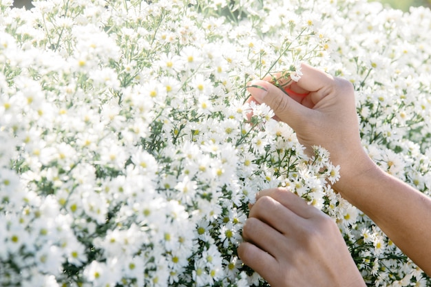 Primo piano delle mani della giovane donna che decora i fiori bianchi